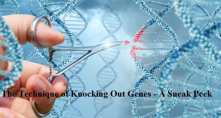 Technique of Knocking Out Genes